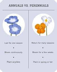 Annual Vs Perennial Vs Biennial - Annual Biennial Perennial Sens