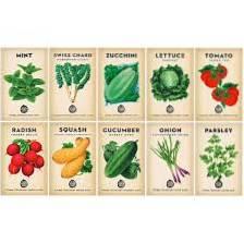 Zeleninová semínka pro začátečníky - Jaká zeleninová semínka se snadno pěstují