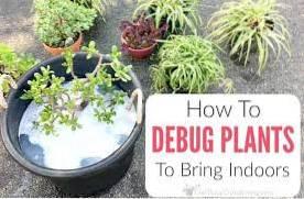 Felkontroll för krukväxter - Felsökning av växter innan de tas in
