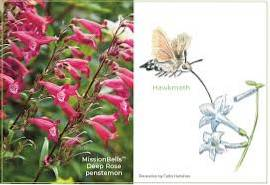 Forme di fiori e impollinatori - Attirare gli impollinatori con forme di fiori