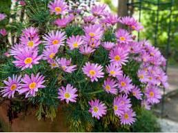 Kwiaty, które kwitną jesienią Dowiedz się o jesiennych kwiatach na Środkowym Zachodzie