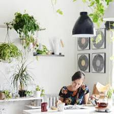 Kitchen Houseplants What Plants Grow Best In Kitchens