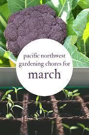 March Gardening Chores - Regional Garden Tips For Pacific Northwest