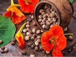 Colheita de Semente de Chagas - Dicas para Coletar Sementes de Chagas