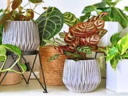 Spring Houseplant Tips - What To Do With Houseplants In Spring