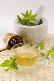 Verbena Tea Information Learn About Growing Lemon Verbena For Tea