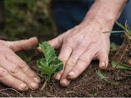 What To Plant In March - Garden Planting In Washington State