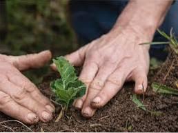 Co sadzić w marcu - sadzenie w ogrodzie w stanie Waszyngton