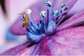 Thrips And Pollination Is Pollination By Thrips Possible