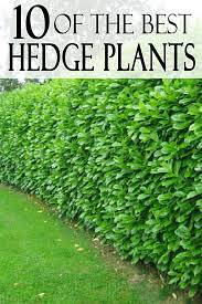 best plants for fence line