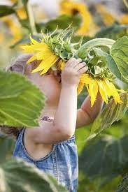 Flower Gardening Ideas For Kids - Making A Sunflower House With Kids
