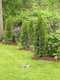 how to hide a fence with plants